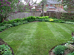 Manicured lawn and garden